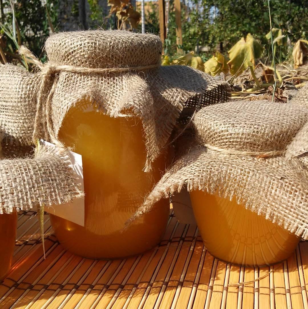 Мед из подсолнечника польза и вред