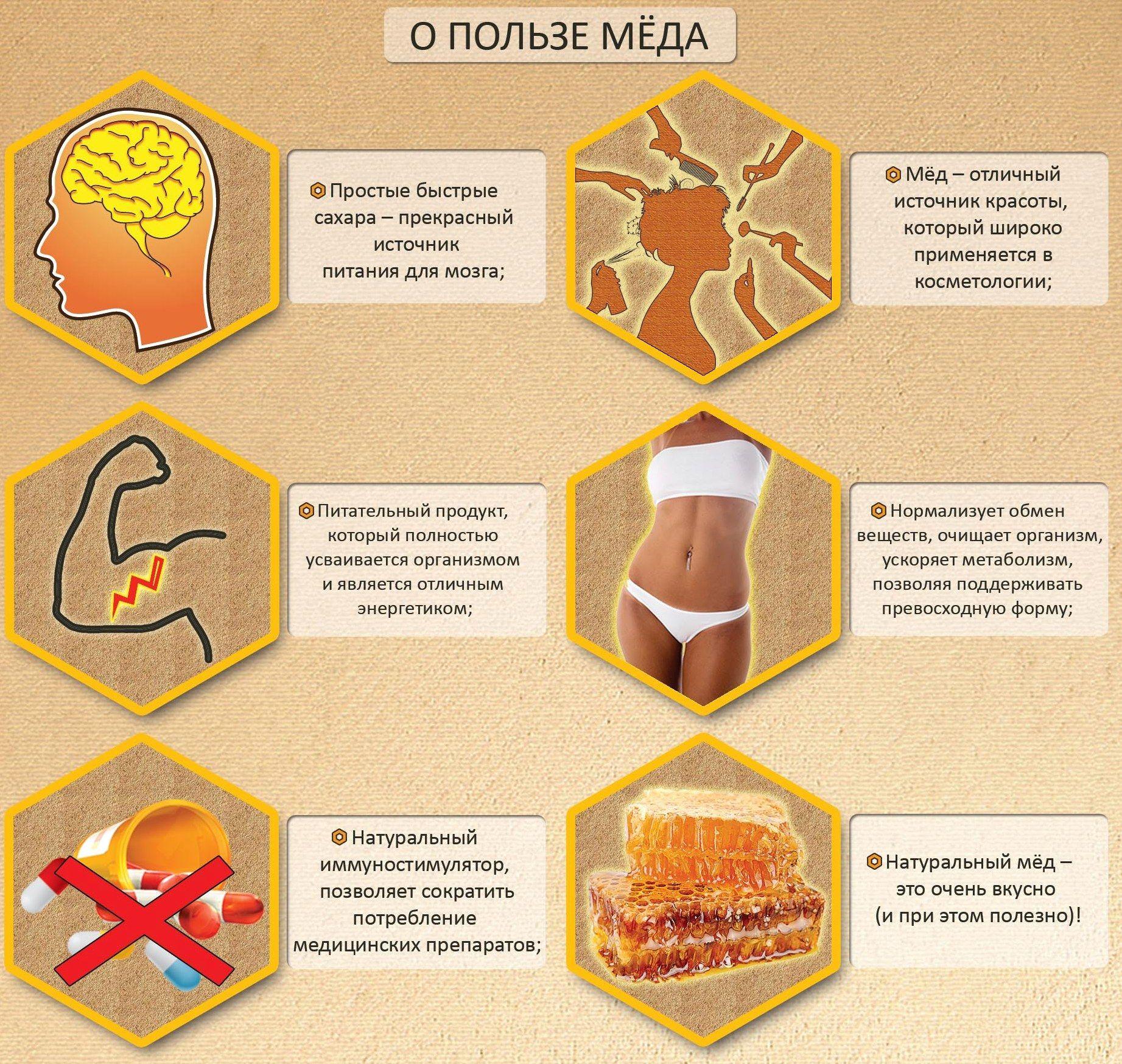 Инфографика: о пользе меда