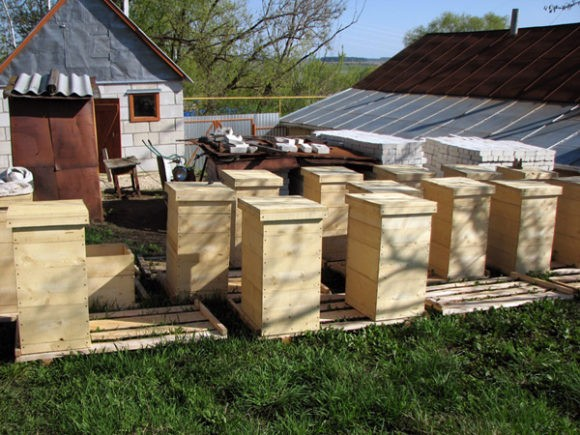 Многоэтажка для пчел: вся польза изобретения Рута
