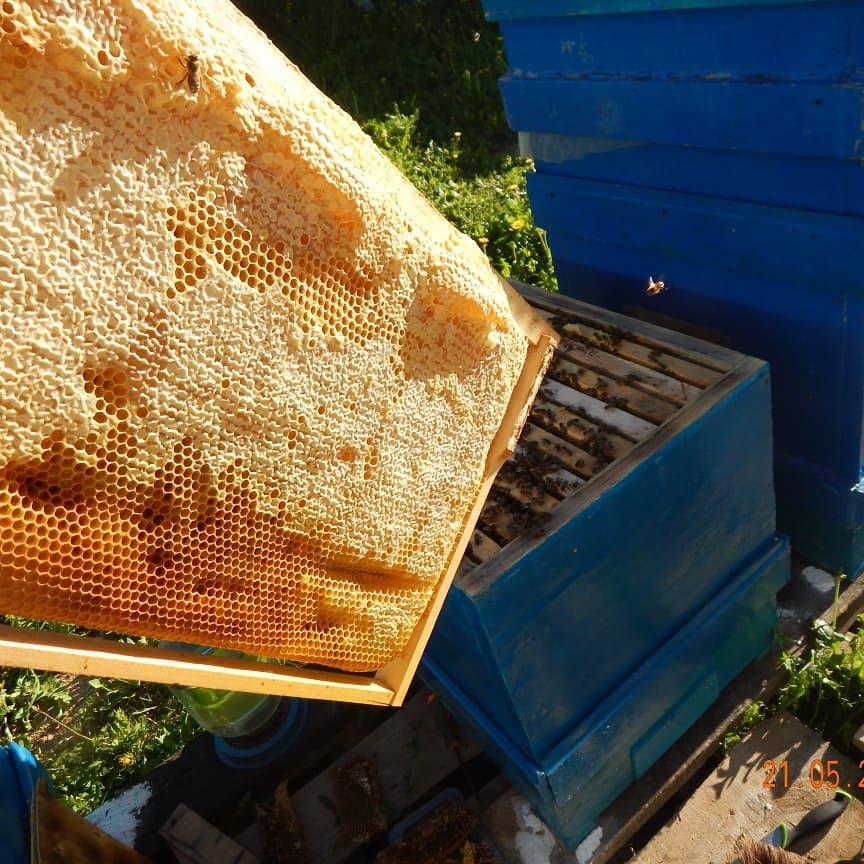 Майский мед: польза, рецепты от болезней