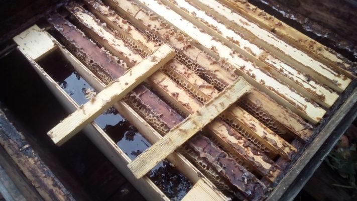 По какой причине пчелы покидают улей осенью и больше не возвращаются?